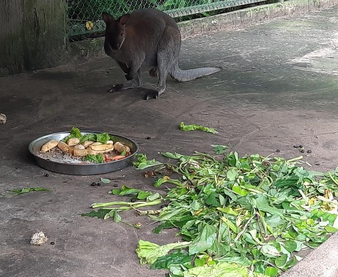 Cận cảnh hàng tấn rau, quả hỗ trợ thú ở Thảo Cầm Viên - Ảnh 6.