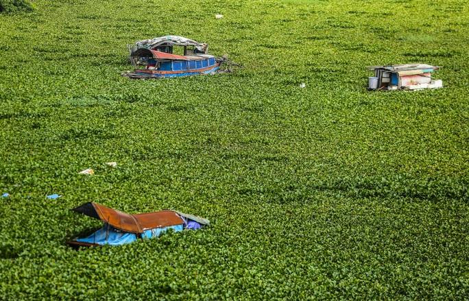 CLIP: Lạ lẫm bãi giữa sông Hồng những ngày nước ngập - Ảnh 16.