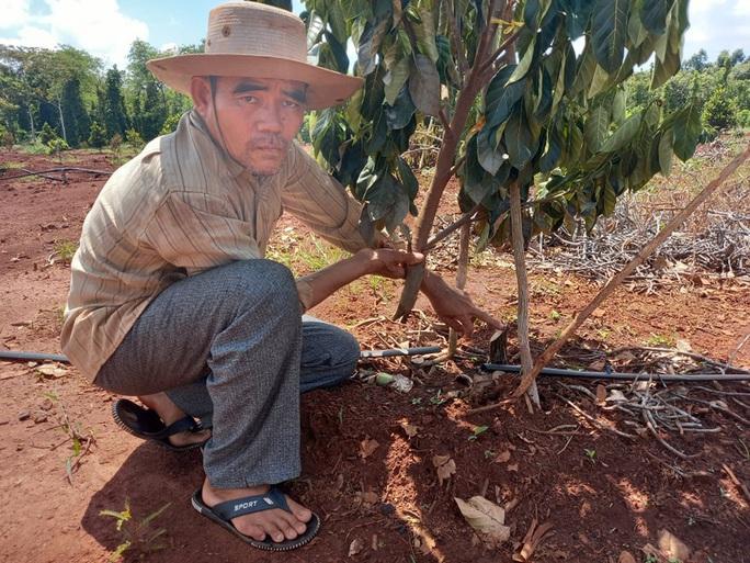 Vụ tàn sát hàng trăm cây ăn trái ở Bà Rịa - Vũng Tàu: Chính quyền ra công văn hỏa tốc đề nghị điều tra - Ảnh 2.
