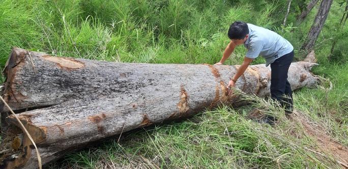 Chở gỗ lậu, người đàn ông không may bị gỗ đè tử vong - Ảnh 1.