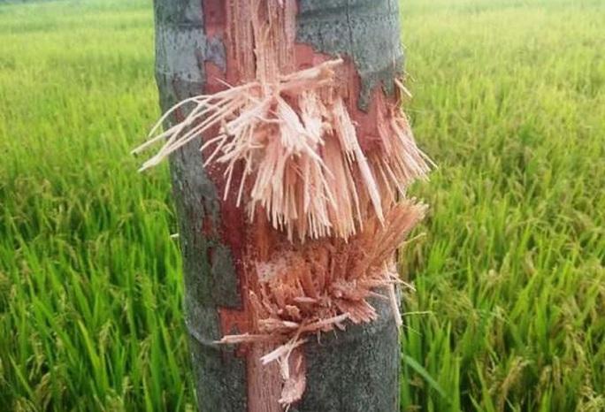 Vụ nổ chết người ở Quảng Nam: Nghi đầu đạn pháo cỡ lớn phát nổ - Ảnh 1.