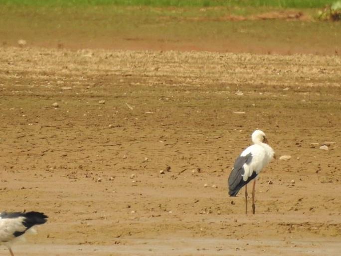 Đàn chim quý bất ngờ xuất hiện ở Đồng Nai - Ảnh 2.