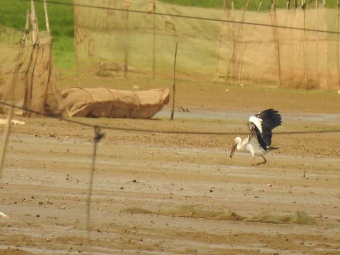 Đàn chim quý bất ngờ xuất hiện ở Đồng Nai - Ảnh 3.