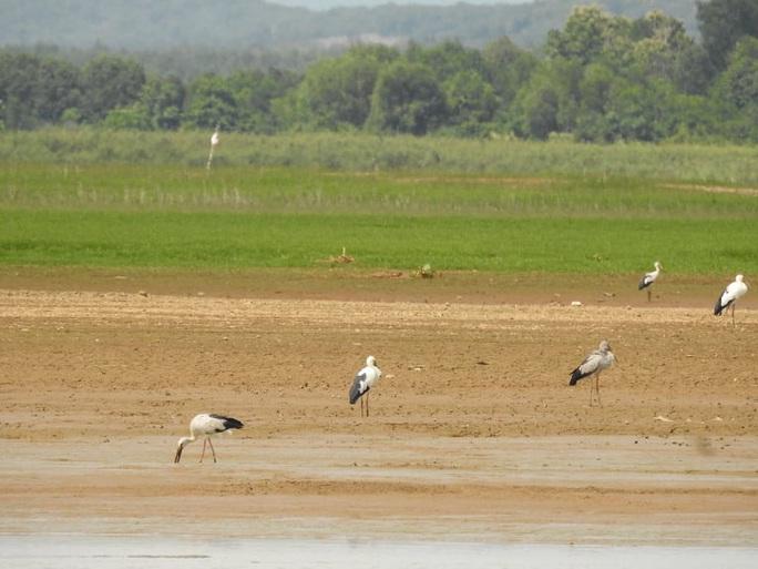 Đàn chim quý bất ngờ xuất hiện ở Đồng Nai - Ảnh 4.