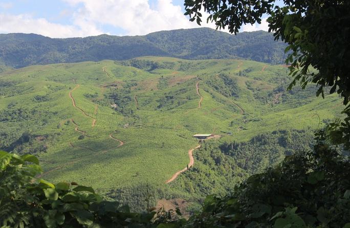 Đang trồng cây trên đồi, một công nhân bị sét đánh tử vong - Ảnh 1.