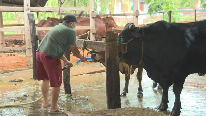 Bắt quả tang lò mổ bơm nước vào bò khi giết mổ - Ảnh 2.