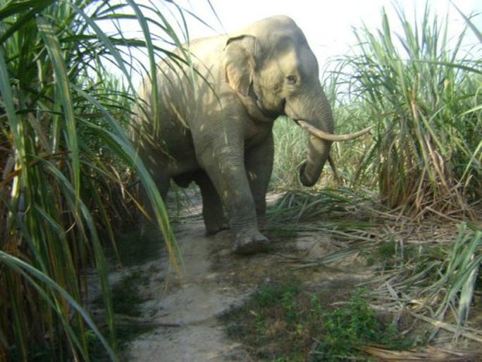 Một cá thể voi rừng đẻ con thành công tại Đồng Nai - Ảnh 1.