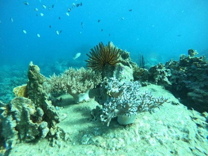 Đa dạng sinh học biển gặp nhiều thách thức - Ảnh 1.