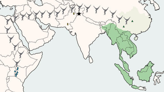 Bí ẩn loài họ hàng con người khai phá Đông Nam Á tận 13 triệu năm trước - Ảnh 1.