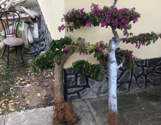Cậu cháu rủ nhau trộm cây cảnh trên đường du lịch ven biển Mũi Né - Ảnh 3.