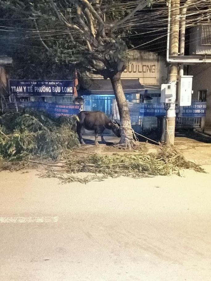 Bắt băng gây 17 vụ trộm trâu, bò khắp các vùng quê Đông Nam Bộ  - Ảnh 2.