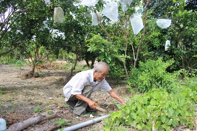 CLIP: Cựu Bí thư Tỉnh đoàn bỏ túi 500 triệu đồng nhờ khu vườn trồng đủ thứ - Ảnh 3.