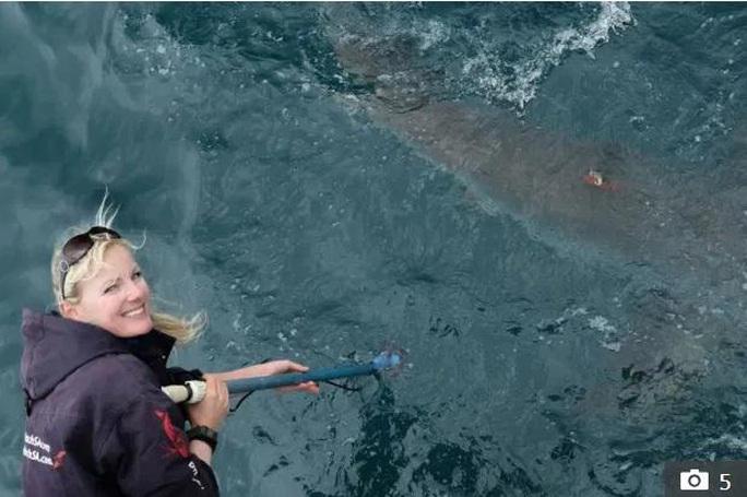 Cá voi sát thủ giết cá mập trắng lớn để ăn gan, tim và tinh hoàn - Ảnh 2.