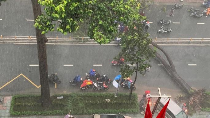 Trời mưa, cây xanh bật gốc đè một người đi đường - Ảnh 1.