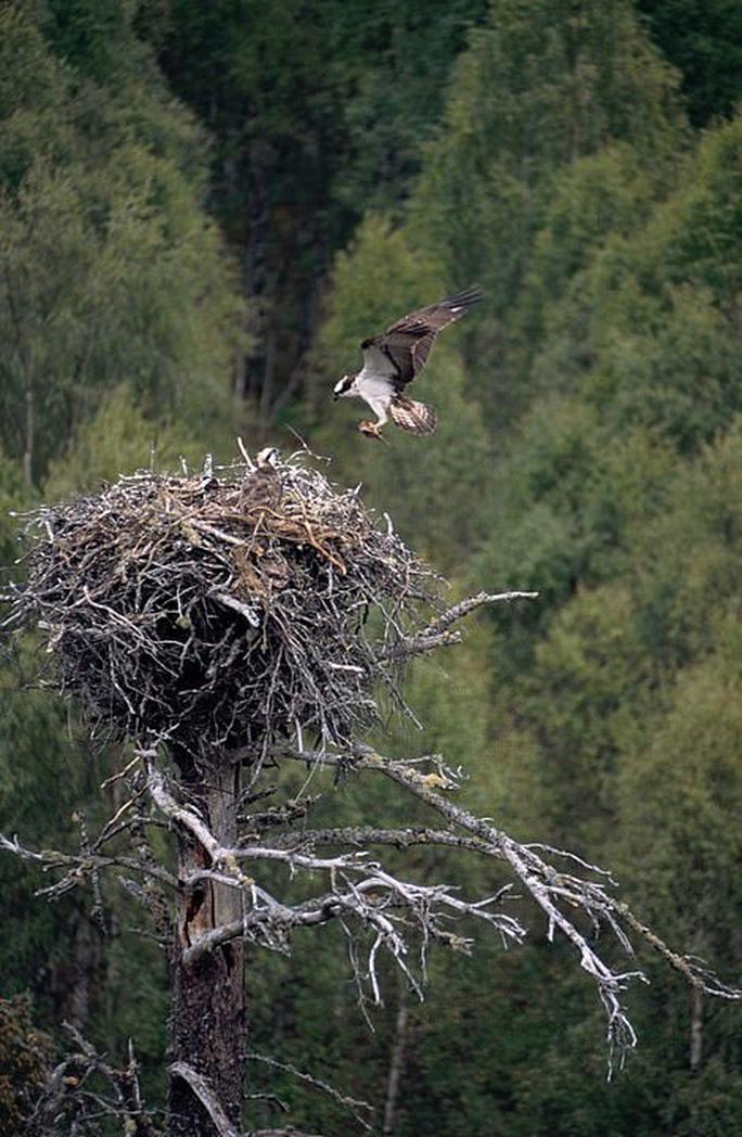 Quấy rầy chim quý ở xứ Wales, chương trình truyền hình bị điều tra - Ảnh 2.