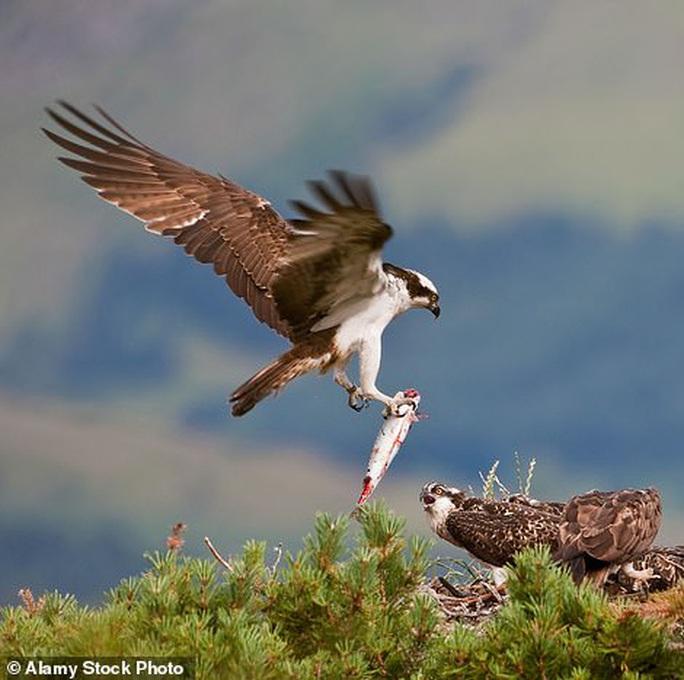 Quấy rầy chim quý ở xứ Wales, chương trình truyền hình bị điều tra - Ảnh 3.