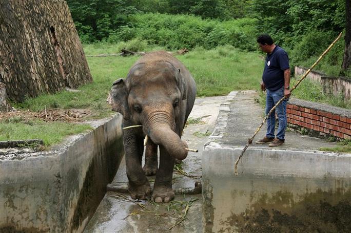 """Con voi cô đơn nhất thế giới"""" được giải cứu - Ảnh 1."""
