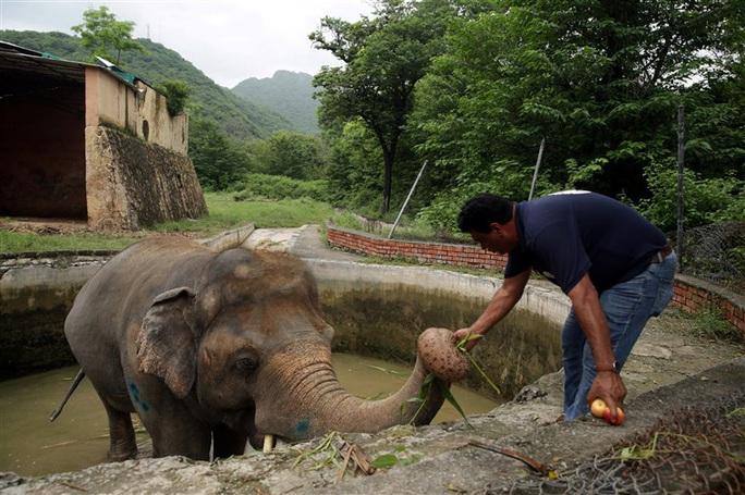 """Con voi cô đơn nhất thế giới"""" được giải cứu - Ảnh 2."""