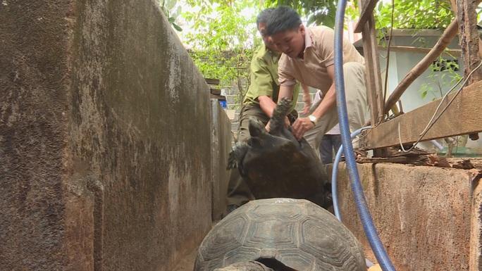 Bị khởi tố vì nuôi nhốt 47 rùa hộp trán vàng quý hiếm - Ảnh 2.