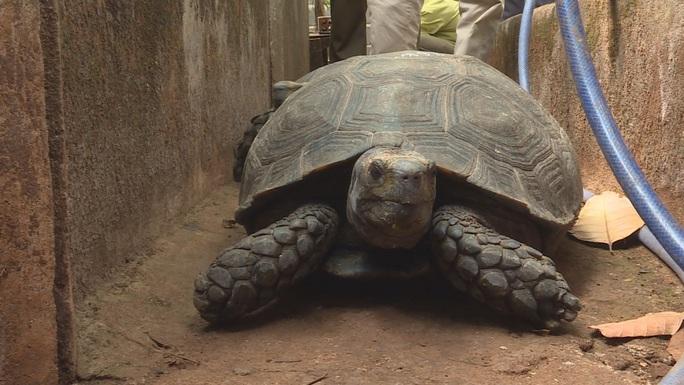 Bị khởi tố vì nuôi nhốt 47 rùa hộp trán vàng quý hiếm - Ảnh 1.