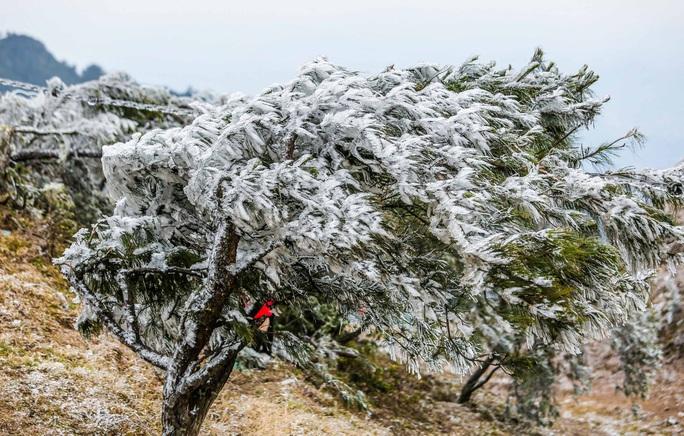 Hàng ngàn du khách bất chấp rét buốt lên đỉnh Mẫu Sơn ngắm băng tuyết - Ảnh 8.
