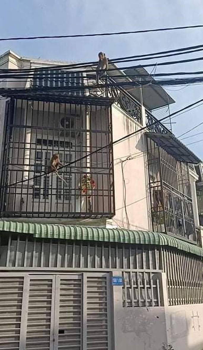 Đàn khỉ quậy tưng bừng ở quận 12, TP HCM - Ảnh 5.