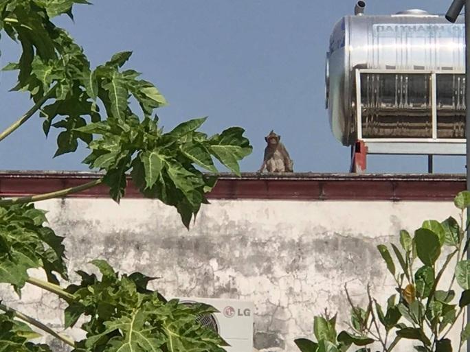Lên phương án đưa đàn khỉ đại náo ở quận 12 ra khu dân cư - Ảnh 4.