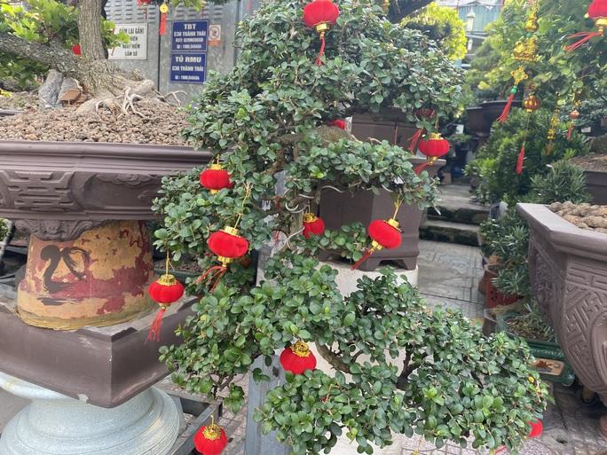 Hoa kiểng Tết đổ ra đường bán sớm, giá còn khá rẻ - Ảnh 7.