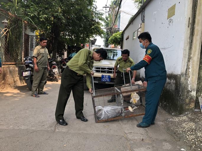 Đã bắt được 2 con khỉ trong đàn khỉ đại náo khu dân cư ở quận 12 - Ảnh 2.