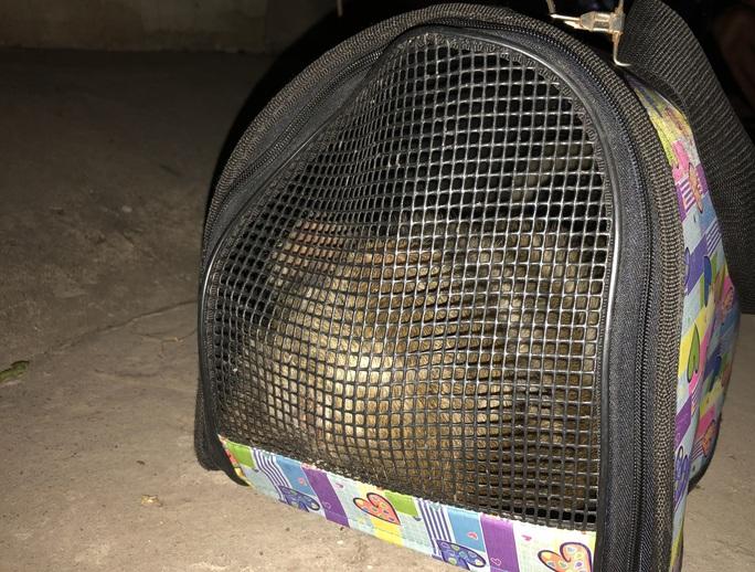 Đã bắt được 2 con khỉ trong đàn khỉ đại náo khu dân cư ở quận 12 - Ảnh 3.