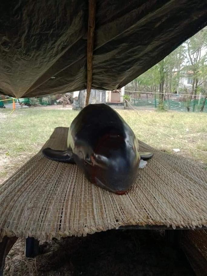 Cá heo dạt vào biển Quảng Nam, người dân làm lễ an táng - Ảnh 4.