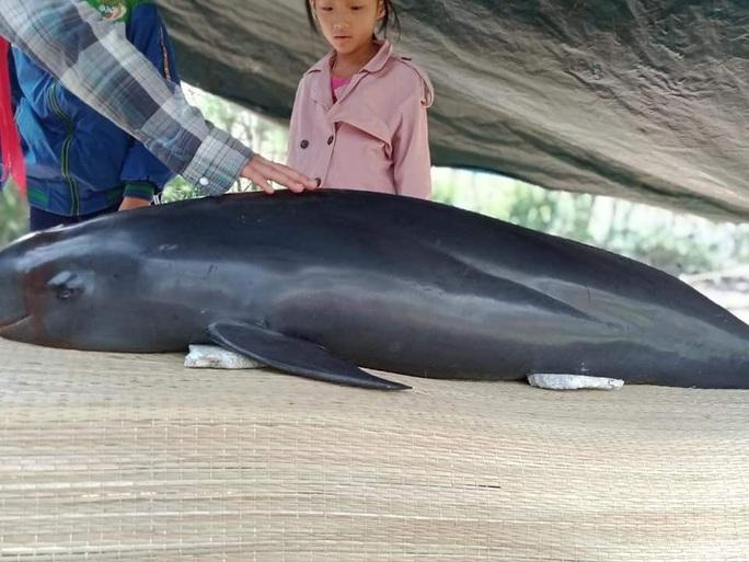 Cá heo dạt vào biển Quảng Nam, người dân làm lễ an táng - Ảnh 2.
