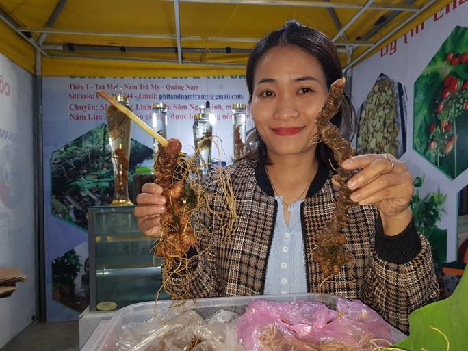 Quảng Nam chi 3 tỉ đồng trồng thử cây sâm Ngọc Linh nuôi cấy mô - Ảnh 1.