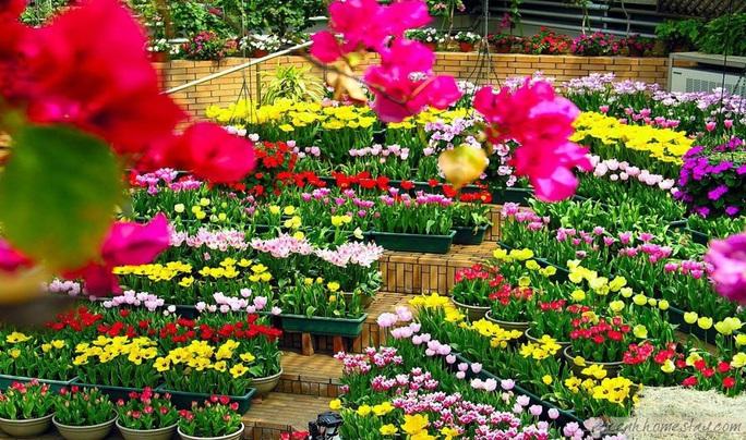 Có gì đặc sắc ở lễ hội hoa kỷ lục hơn 120 triệu Euro tại Quảng Bình? - Ảnh 2.