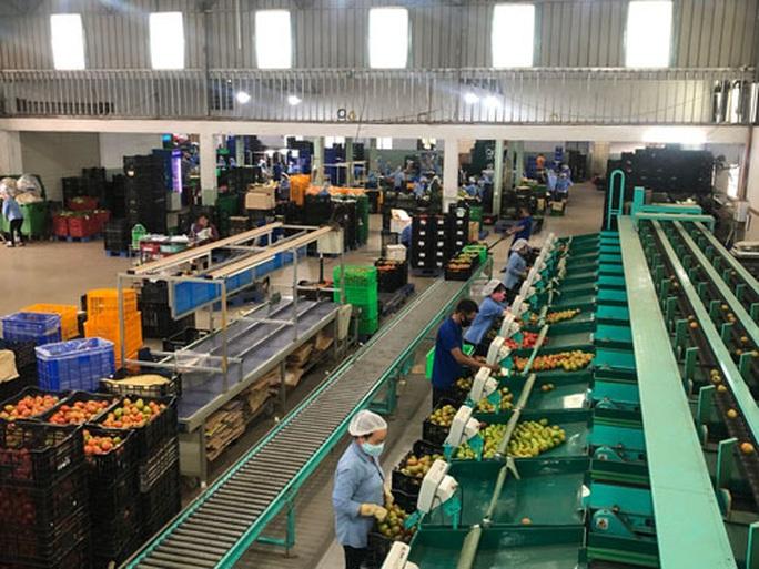 Nông sản Lâm Đồng đổ về TP HCM bán Tết - Ảnh 1.