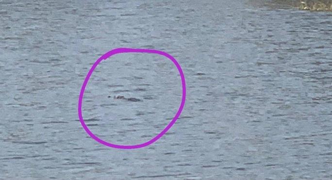 Vũng Tàu: Phát hiện 2 con cá sấu bơi trong hồ nước ngay khu dân cư? - Ảnh 1.