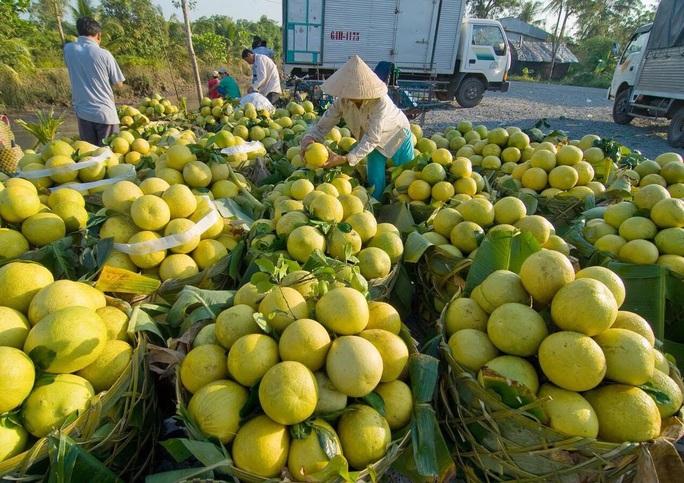 Trái cây Tết ĐBSCL giảm giá mạnh - Ảnh 1.