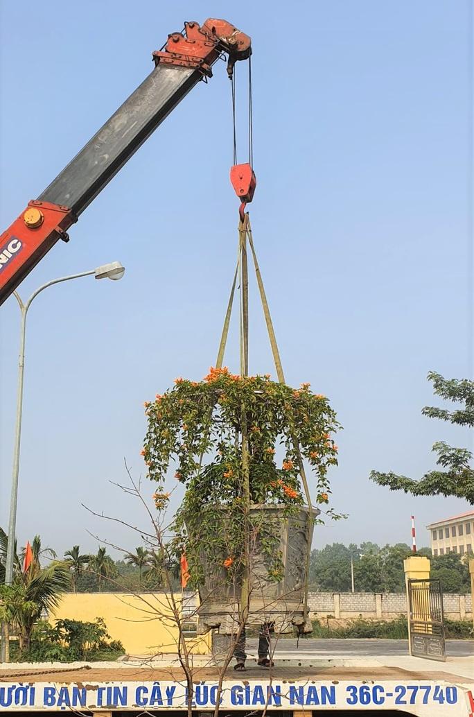 Cây hoa độc, lạ Rạng Đông thân leo bán với giá 50 triệu đồng - Ảnh 2.