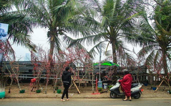 CLIP: Đào gắn tem Vân Hồ - Sơn La xuống phố có giá tới 30 triệu đồng - Ảnh 2.