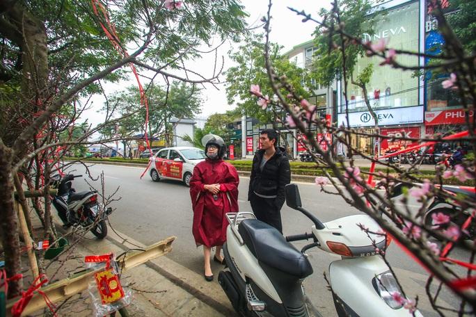 CLIP: Đào gắn tem Vân Hồ - Sơn La xuống phố có giá tới 30 triệu đồng - Ảnh 5.