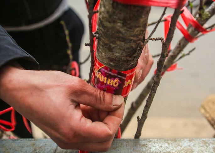 CLIP: Đào gắn tem Vân Hồ - Sơn La xuống phố có giá tới 30 triệu đồng - Ảnh 4.