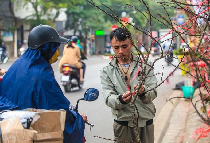CLIP: Đào gắn tem Vân Hồ - Sơn La xuống phố có giá tới 30 triệu đồng - Ảnh 11.