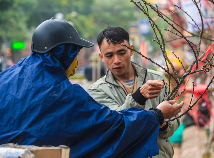 CLIP: Đào gắn tem Vân Hồ - Sơn La xuống phố có giá tới 30 triệu đồng - Ảnh 7.
