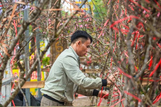 CLIP: Đào gắn tem Vân Hồ - Sơn La xuống phố có giá tới 30 triệu đồng - Ảnh 15.