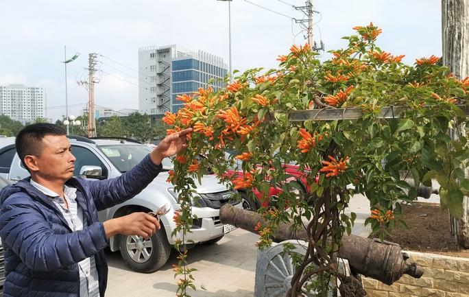 Cây hoa độc, lạ Rạng Đông thân leo bán với giá 50 triệu đồng - Ảnh 3.