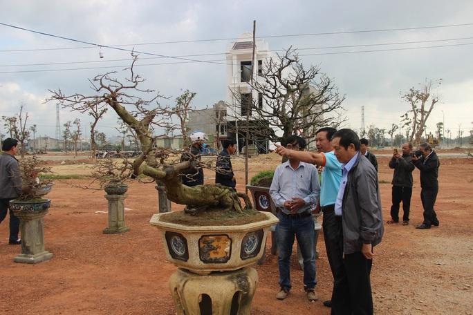 Mãn nhãn với hàng trăm tuyệt tác tại hội thi mai vàng ở Bình Định - Ảnh 3.