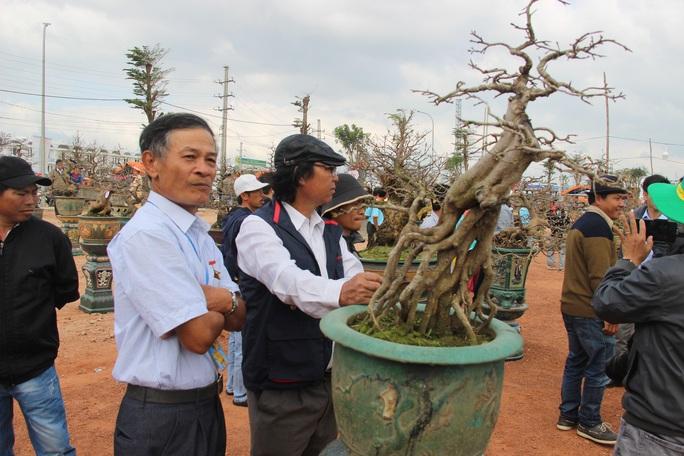 Mãn nhãn với hàng trăm tuyệt tác tại hội thi mai vàng ở Bình Định - Ảnh 4.