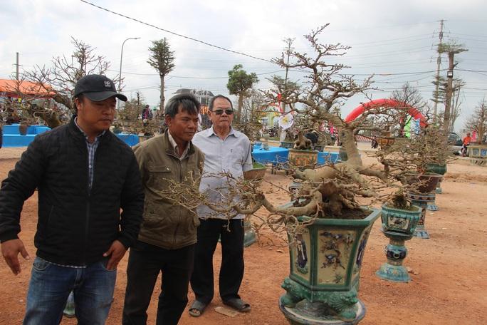 Mãn nhãn với hàng trăm tuyệt tác tại hội thi mai vàng ở Bình Định - Ảnh 6.