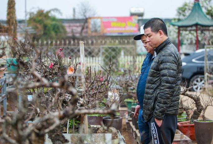 """Loại đào VIP được """"nằm điều hoà"""" chờ ra thị trường Tết Tân Sửu 2021 - Ảnh 6."""
