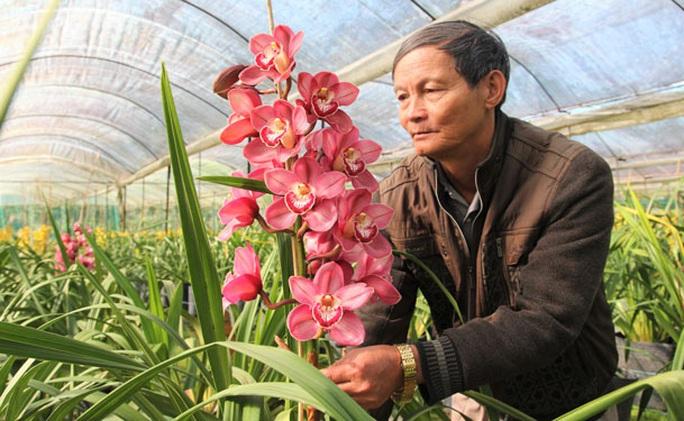 Hoa Trung Quốc gắn mác hoa Tết Đà Lạt - Ảnh 1.